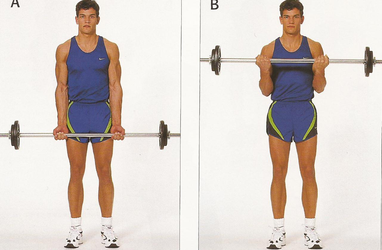 Curl biceps con barra escorpi n gimnasio mixto escuela de combate - Barras de ejercicio para casa ...